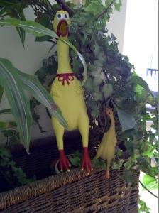 creepy chickens