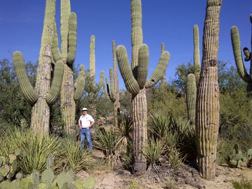 That's Hubby mugging with our new neighbours, the saguaro cacti (also prickly pears in the foreground)