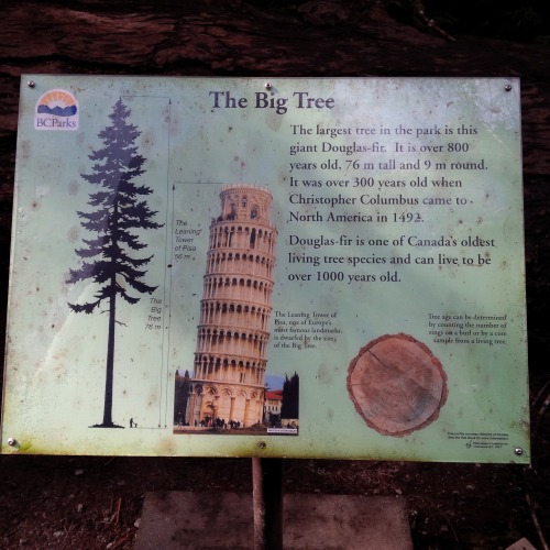 big tree sign