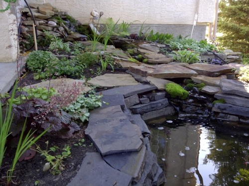 The pond last spring. It looks benign, but don't inhale for a day or so…