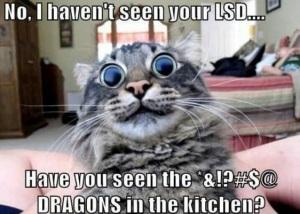 2016-11-dragons-in-kitchen